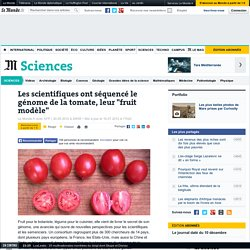 """Les scientifiques ont séquencé le génome de la tomate, leur """"fruit modèle"""""""