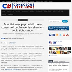 Scientist says psychedelic brew consumed by Amazonian shamans could fight cancer