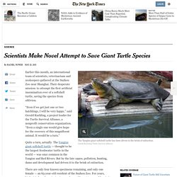 Scientists Make Novel Attempt to Save Giant Turtle Species