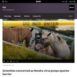 ABC 26/07/11 Scientists concerned as hendra virus jumps species barrier