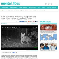 How Scientists Are Using Poop to Study New York City's Coyote Population