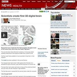 Scientists create first 3D digital brain