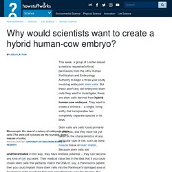 Why would scientists want to create a hybrid human-cow embryo?