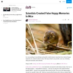 Scientists Created False Happy Memories In Mice
