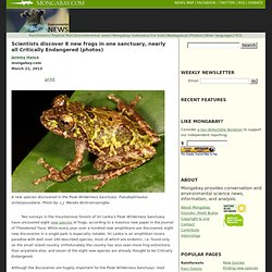 Scientists discover 8 new frogs in one sanctuary, nearly all Critically Endangered (photos)