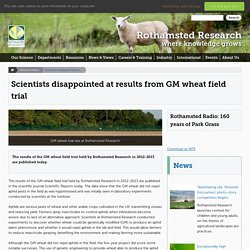 ROTHAMSTED_AC_UK 25/06/15 Scientists disappointed at results from GM wheat field trial