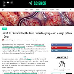 Scientists Discover How The Brain Controls Ageing – And Manage To Slow It Down