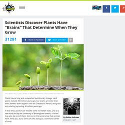 "Scientists Discover Plants Have ""Brains"" That Determine When They Grow"