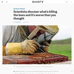 Scientists discover what's killing the bees and it's worse than you thought - Quartz
