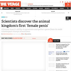 Scientists discover the animal kingdom's first 'female penis'