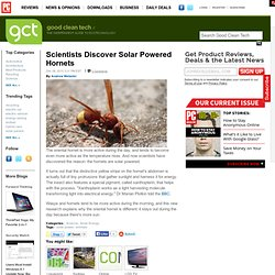 Scientists Discover Solar Powered Hornets - GoodCleanTech