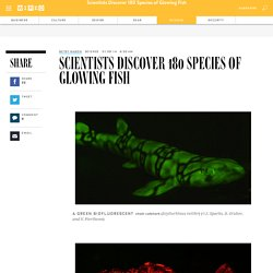 Scientists Discover 180 Species of Glowing Fish