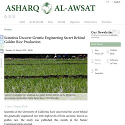 AAWSAT 24/03/20 Scientists Uncover Genetic Engineering Secret Behind Golden Rice Production
