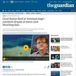 Great Barrier Reef at 'terminal stage': scientists despair at latest coral bleaching data