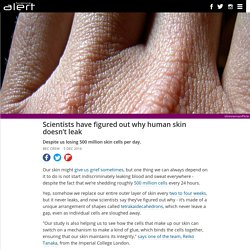 Scientists have figured out why human skin doesn't leak