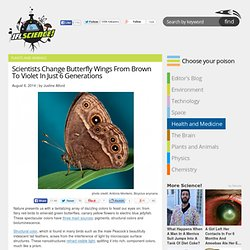 Scientists Change Butterfly Wings From Brown To Violet In Just 6 Generations