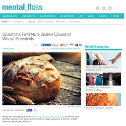 Scientists Find Non-Gluten Cause of Wheat Sensitivity
