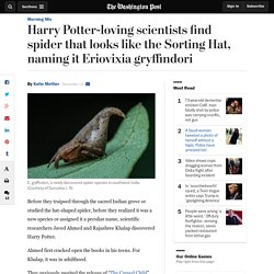 Harry Potter-loving scientists find spider that looks like the Sorting Hat, naming it Eriovixia gryffindori