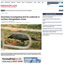 BDNEWS24 18/02/16 Scientists investigating bird flu outbreak in northern Bangladesh crows