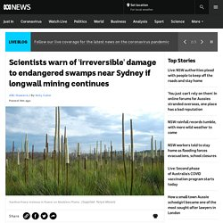 Scientists warn of 'irreversible' damage to endangered swamps near Sydney if longwall mining continues