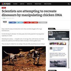 Scientists are attempting to recreate dinosaurs by manipulating chicken DNA