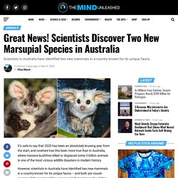 Great News! Scientists Discover Two New Marsupial Species in Australia