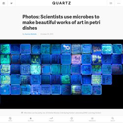 Photos: Scientists use microbes to make beautiful works of art in petri dishes — Quartz