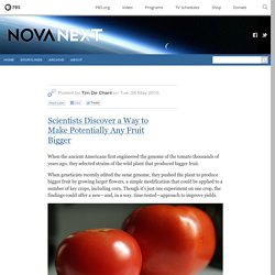 Scientists Discover a Way to Make Potentially Any Fruit Bigger — NOVA Next
