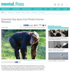 Scientists Say Apes Can Predict Human Mistakes