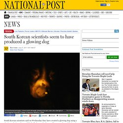 South Korean scientists seem to have produced a glowing dog