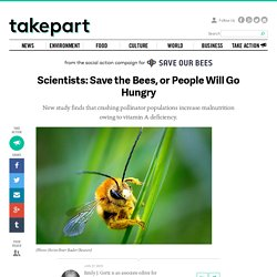 Scientists: Save the Bees, or People Will Go Hungry