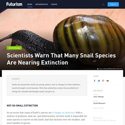 Scientists Warn That Many Snail Species Are Nearing Extinction