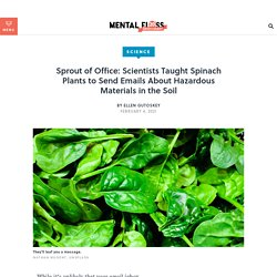 Scientists Taught Spinach to Send Emails About Hazmat in the Soil