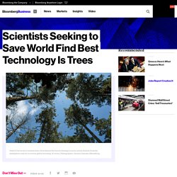 Scientists Seeking to Save World Find Best Technology Is Trees