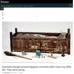 Scientists thought ancient Egyptian mummies didn't have any DNA left. They were wrong