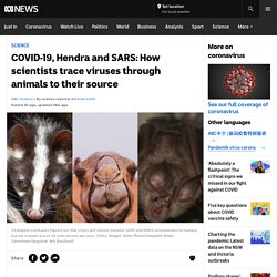 COVID-19, Hendra and SARS: How scientists trace viruses through animals to their source