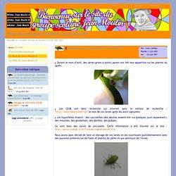 Site du groupe scolaire Jean Moulin - Elevage de coccinelle (CE2B, 2006-2007)
