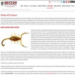 Scorpion Control Phoenix AZ