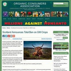 Scotland Announces Total Ban on GM Crops