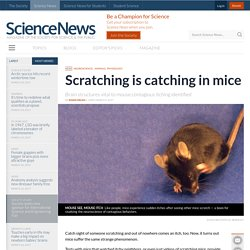 Scratching is catching in mice