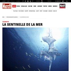 SeaOrbiter - La sentinelle de la mer