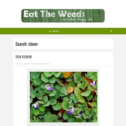 You searched for clover - Eat The Weeds and other things, too