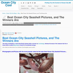 Best Ocean City Seashell Pictures, and The Winners Are