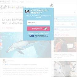 Le parc SeaWorld annonce la mort de Dart, un dauphin âgé d'à peine 12 ans
