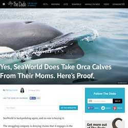 Yes, SeaWorld Does Take Orca Calves From Their Moms. Here's Proof.