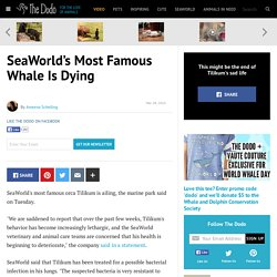 SeaWorld's Most Famous Whale Is Dying