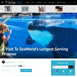 A Visit To SeaWorld's Longest-Serving Prisoner