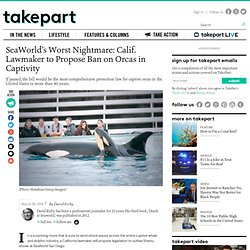 SeaWorld's Worst Nightmare: Calif. Lawmaker to Propose Ban on Orcas in Captivity