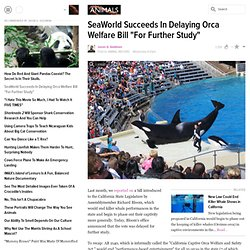 "SeaWorld Succeeds In Delaying Orca Welfare Bill ""For Further Study"""