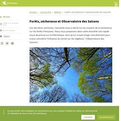 Forêts, sécheresse et Observatoire des Saisons